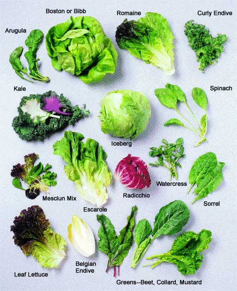 Salad Basics